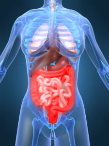 digestive system proper functioning with proper nutrition, Dr. Rodger Murphree