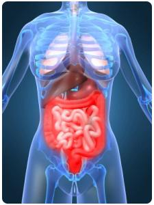 digestive-system-225x300