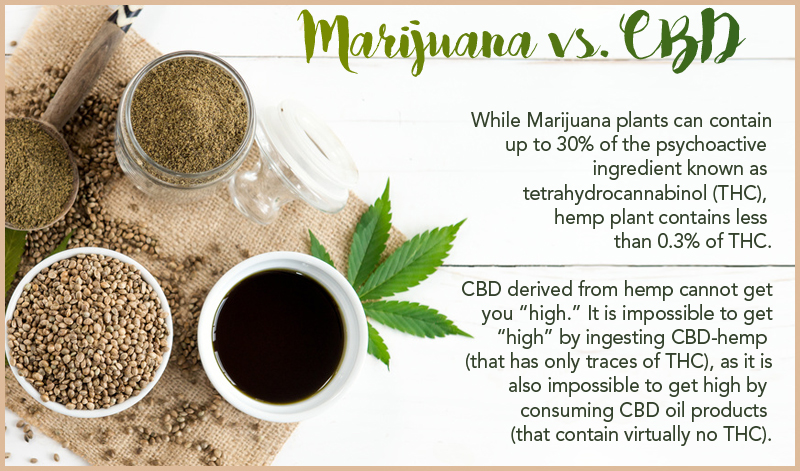 Marijuana vs CBD